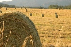 Haystack Monitoring